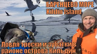 Рыбалка в Баренцевом море Ловля трески и зубатки в районе острова Кильдин Стейк из трески