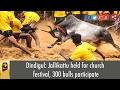 Dindigul: Jallikattu Held For Church Festival, 300 Bulls Participate video