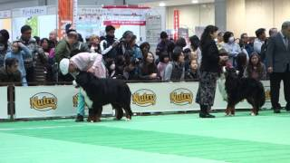 FCIジャパンインターナショナルドッグショー バニーズマウンテンドッグ ...