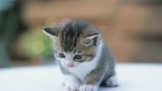 【こどもの日特集】明日こどもの日だから色々動物の子供の画像貼る【前編】