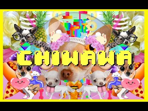 Wanko Ni Mero Mero - Chiwawa (Official Video)