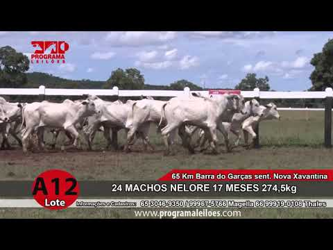 LOTE A12