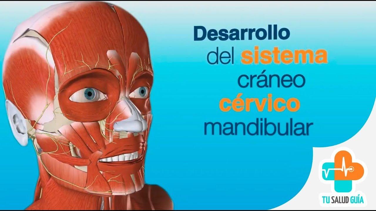 Desarrollo del Sistema Cráneo Cérvico Mandibular - YouTube