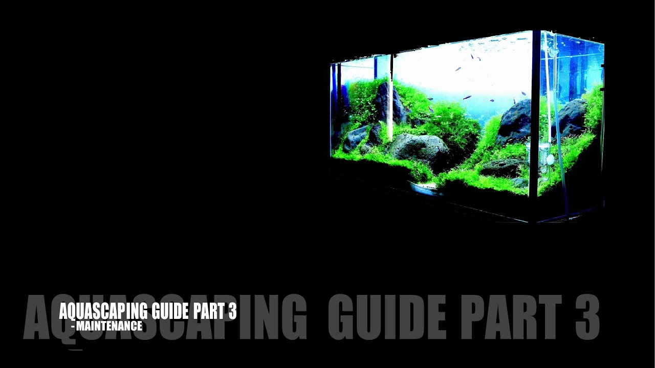 Aquascaping Guide Part 3 - Maintenance - YouTube