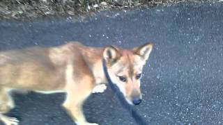静岡県浜松市で犬のブリーダーをしながらしつけ教室をしているペットの...