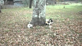 Голодные деревенские коты. Хлеб.