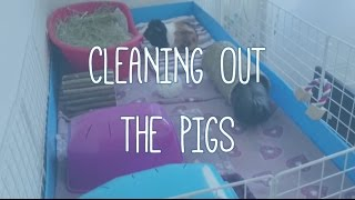CLEANING THE GUINEA PIGS - How I clean my fleece C&C cage