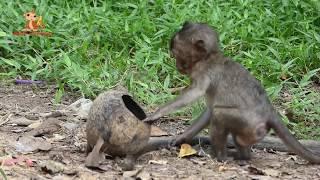 Baby Monkey Lori