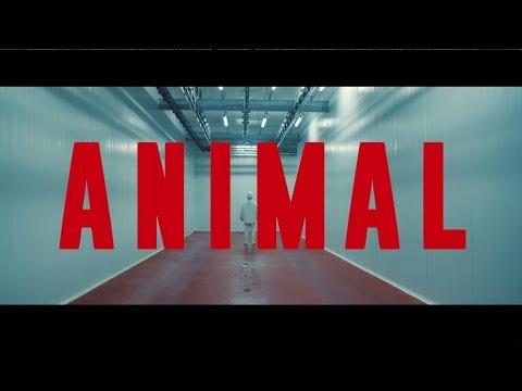 ANIMAL     Dirigido por Armando Bo  Guillermo Francella  Carla Peterson.