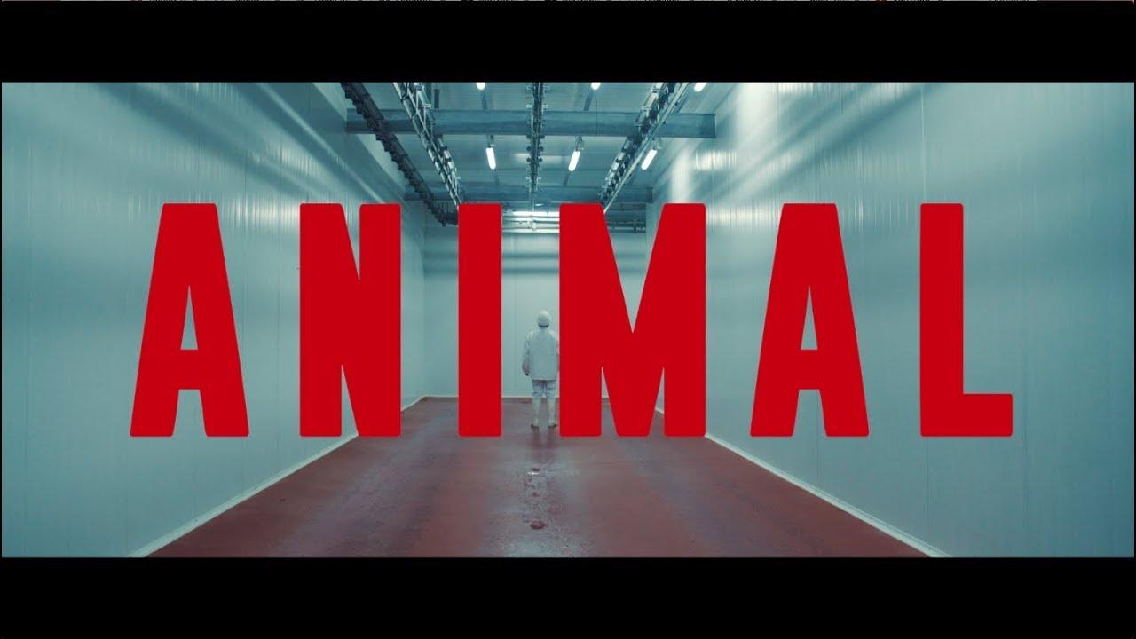 ANIMAL - TEASER TRAILER - Dirigido por Armando Bo / Guillermo Francella - Carla Peterson.