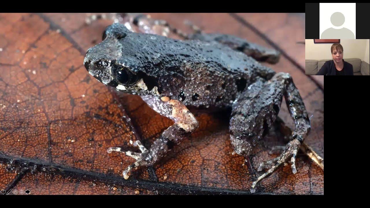 "Dr Jodi Rowley, ""Adventures in Amphibian Conservation"" Dec 2020"