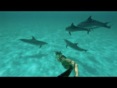 Swimming With The Spotted DOLPHIN of The Great Bahama Bank