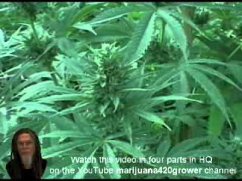 How To Grow Marijuana Light Depot 2012