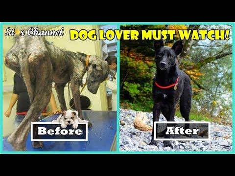 Incredible Before And After Rescue Dog Transformations 🌟 Dog Lover Must Watch
