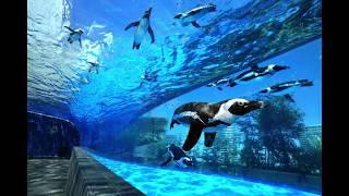 最新の水族館の魅力を、水族館プロデューサー中村元さんのガイドでお伝...