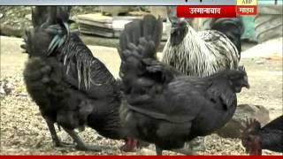 Osmanabad: kadaknath chicken & eggs sold on OLX APP
