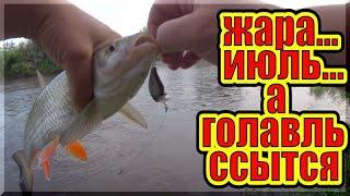 Ловля голавля на спиннинг в июле Рыбалка на малой реке