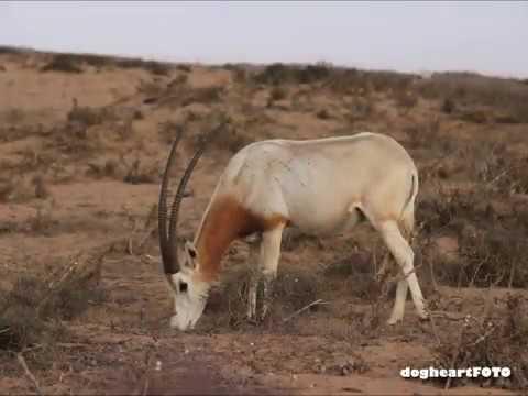 Wild Morocco