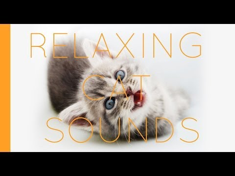 Cat Meow Sound Kittens And Cats Meowing Sounds SFX Kitty Noises Relaxing Feline Purrs