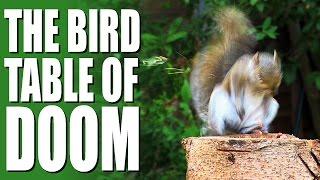 Garden Squirrel Control - The Bird Table Of Doom