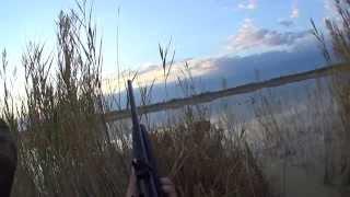 Охота на утку с МР 155 и коллиматор DOCTER®sight II