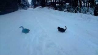 Katzen spielen im Schnee