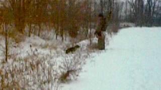 German Shorthair Pointer Begins Search Video 038.avi