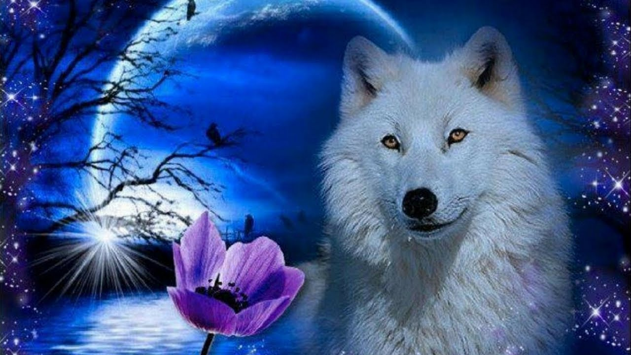 Guided Meditation For Kids Your Guardian Wolf