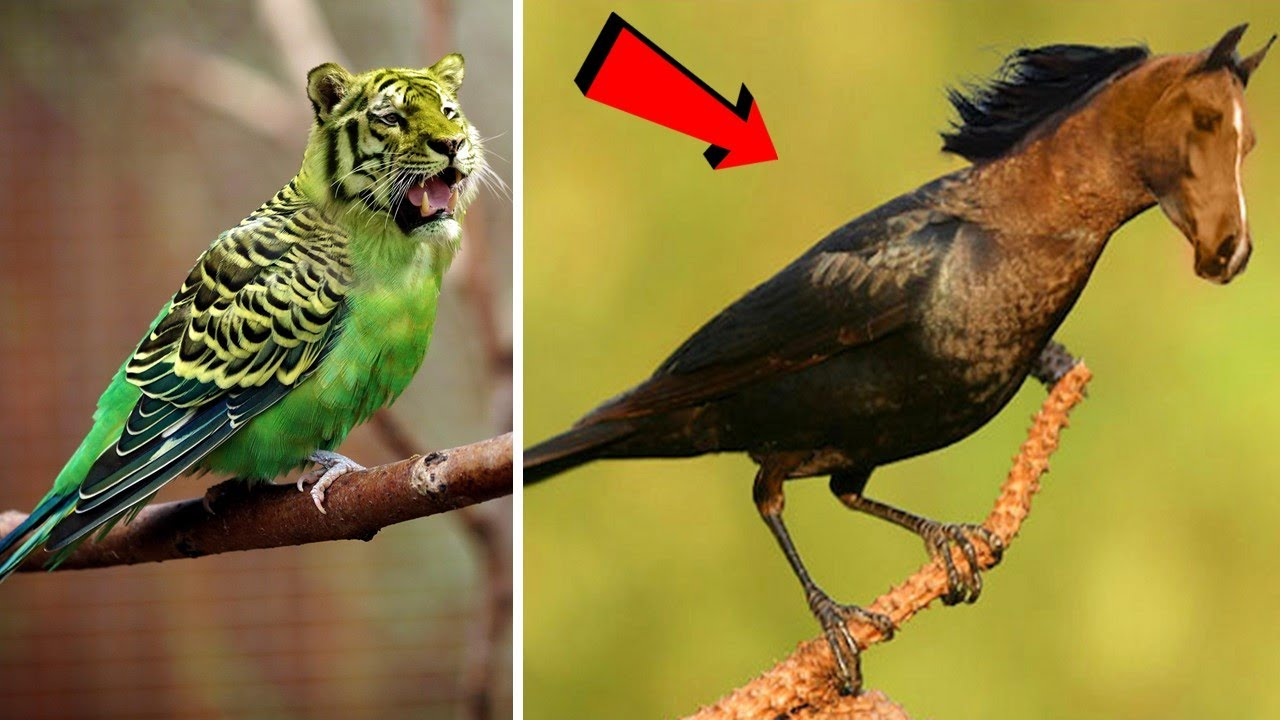 10 ऐसे तोते ( parrots ) जिन्हें देखने के लिए नसीब लगता है | Most Rare And Amazing Parrots
