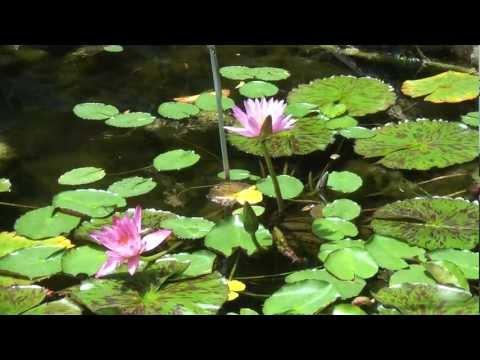 Botanic Garden Tropical Centre Sydney, botanikus kert, trópusi center, Ausztrália