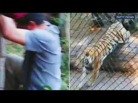 Kid Jay - Man jumps fence at Oakland Zoo tiger exhibit