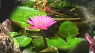 Мудрец Йога Васиштха - Обучение Рамы и полное понимание истинного абсолюта. 004