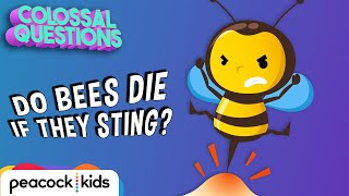 Why Do Bees Die After Stinging You? | COLOSSAL QUESTIONS