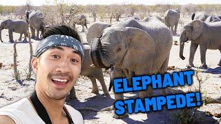 Greatest Wildlife Sanctuary in Etosha, Africa | White Rhino Conservation | Elephant Stampede