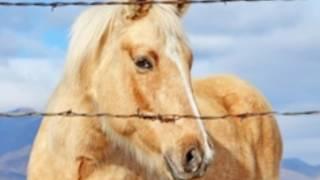 Konie piękne zwierzęta 💖#9