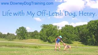 How to Train Your Dog to be Reliable Off Leash
