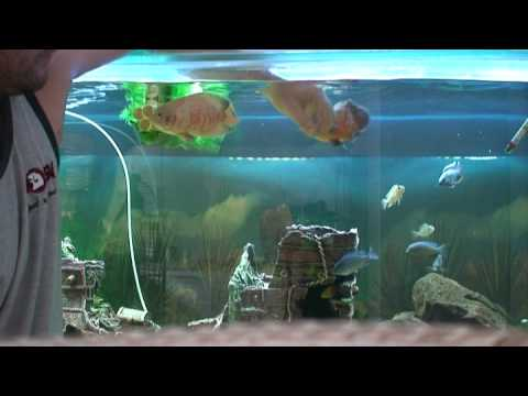 7 months crazy big fish tank petting and feeding the for Youtube fishing videos big fish