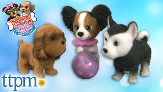 Puppy in My Pocket 10 Piece Play Pack from Just Play