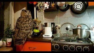 Туда и обратно. Осталось научить сову заваривать чай и макать в него печеньки.