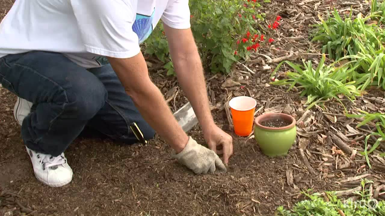 Plant propagation with a soda bottle|Central Texas Gardener - YouTube