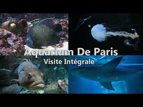 Aquarium de Paris Visite Intégral - La Nature Est Si Merveilleuse Et Insolite -1080p60 Ultra