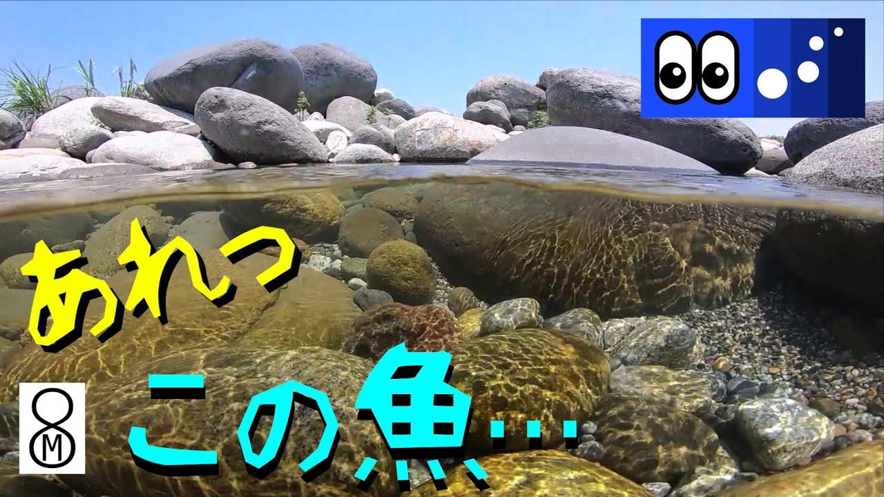 【水辺潜入】ヤマメも棲む清流、あれっ、この魚は・・・?