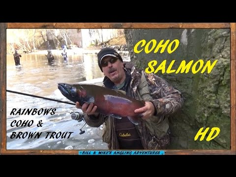 RAINBOWS , RED COHO & BROWN TROUT FISHING