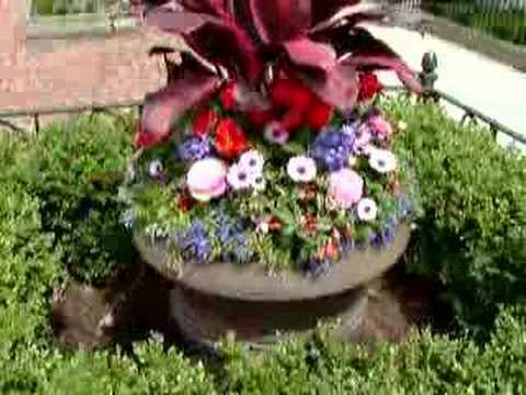 Chicago GARDEN DESIGN ** Houseplants ** LANDSCAPE ** FLOWERS
