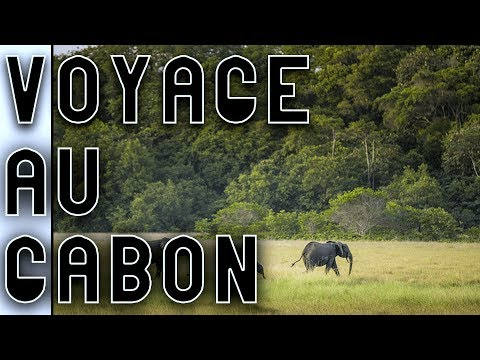 Un Voyage Au Gabon