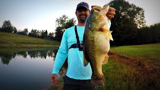 Pond Fishing Buzzbaits and Rats - MONSTER!