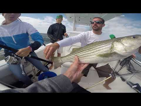 Catching Rockfish (Stripers) With Live Spot On The Chesapeake Bay