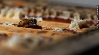 The President's Plan To Save Vanishing Bees, Pollinators