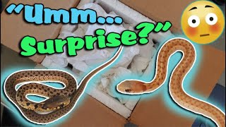 Ed Buys & Unboxes Snakes Without me Knowing!