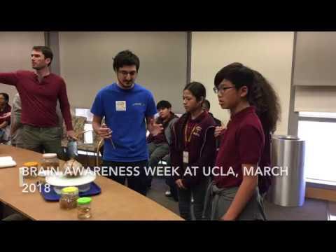 Brain Awareness Week 2018 | UCLA Health